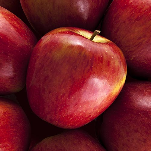 KORU® Apples from New Zealand in sixth U.S. season