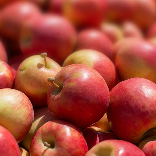 An apple that grew by chance is now being grown in  New York State